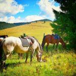Povestea Locurilor @ Carpathian Horse Trekking Valea Jiului echitatie