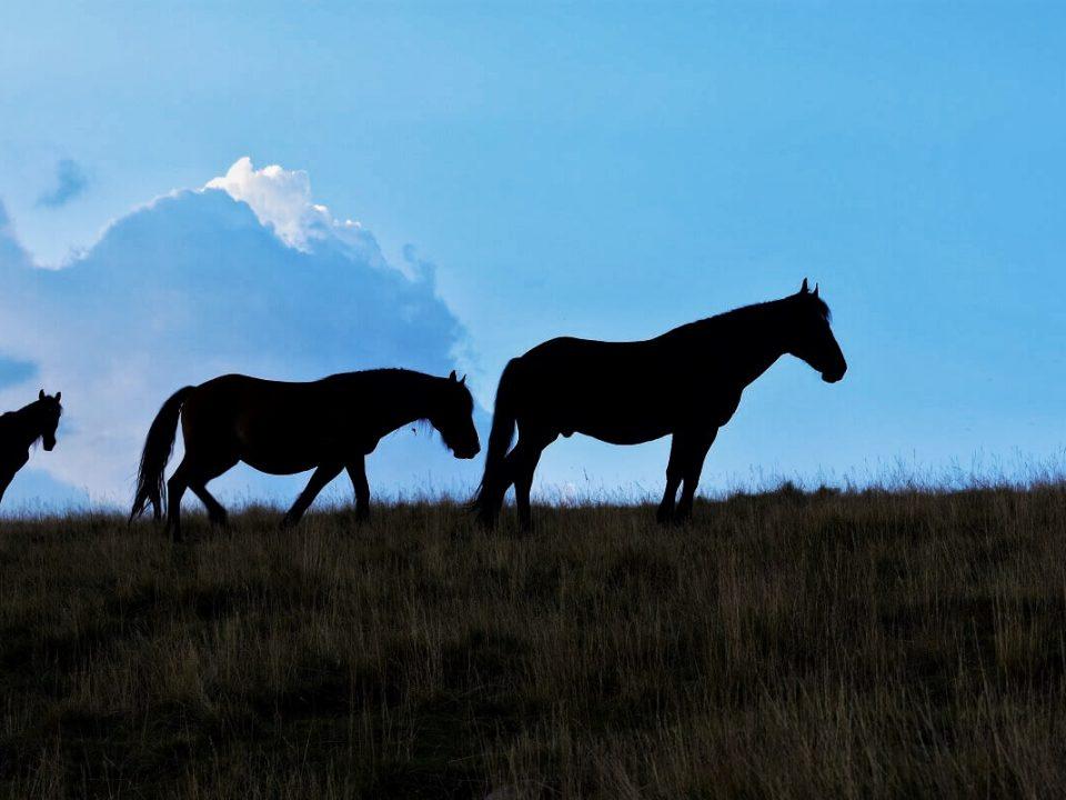 Ținutul Momârlanilor Drumeție Călare @ Carpathian Horse Trekking 1