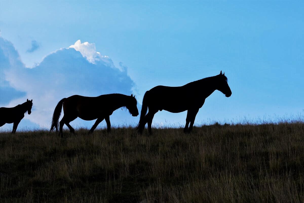 Tinutul Momarlanilor Drumetie Calare @ Carpathian Horse Treking 1