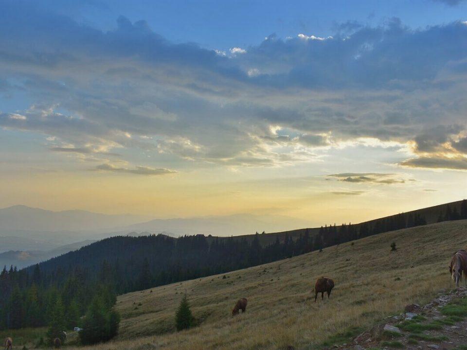 Ținutul Momârlanilor Drumeție Călare @ Carpathian Horse Trekking 2