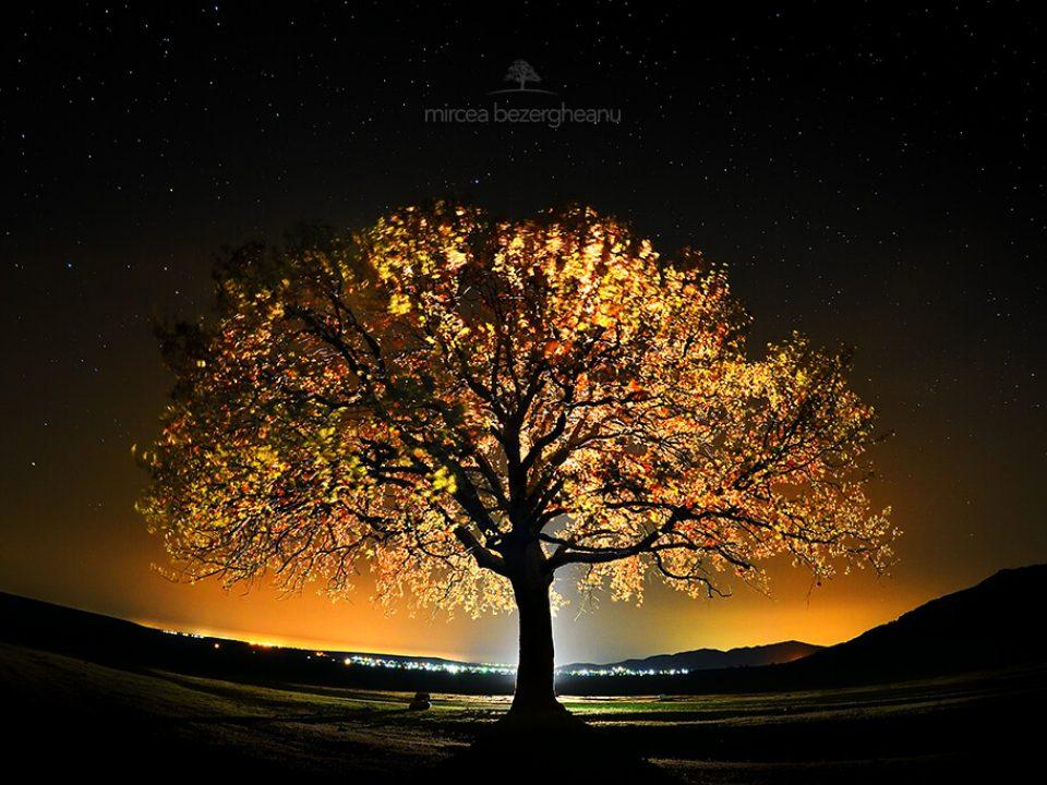 Copacul Căpitanului