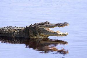 Printre aligatori @ Avram IANCU Mississippy 2018 Povestea Locurilor