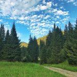 Poiana IARULUI Valea JIULUI Rezervatia Retezat