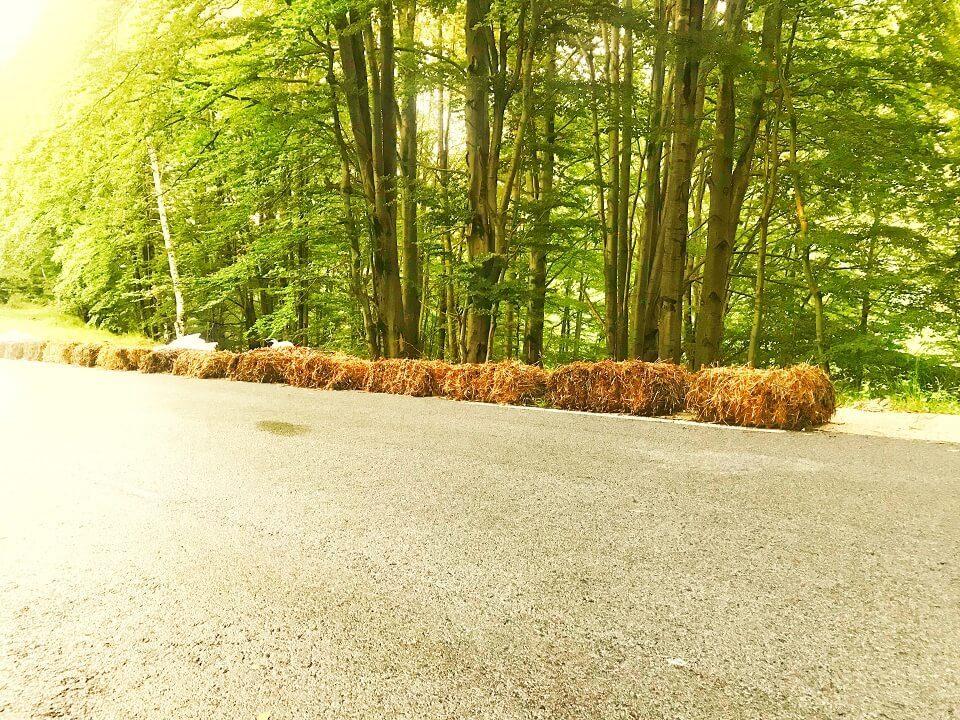 Transylvania Downhill, cel mai rapid traseu de downhill skateboarding din lume Pasul Vâlcan 2