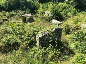 Buruienile de langa plaja din Mangalia Situl arheologic CALLATIS