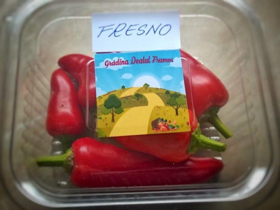 Permacultură BIO @ Grădina Dealul Frumos ANINA 10
