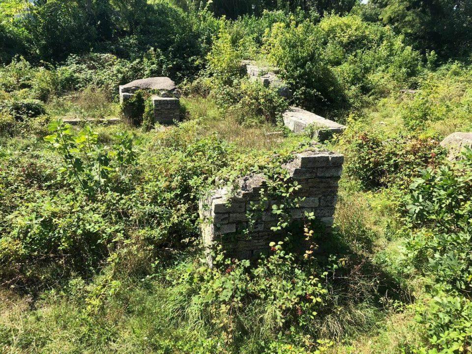 Buruienile antice din MANGALIA SW!M