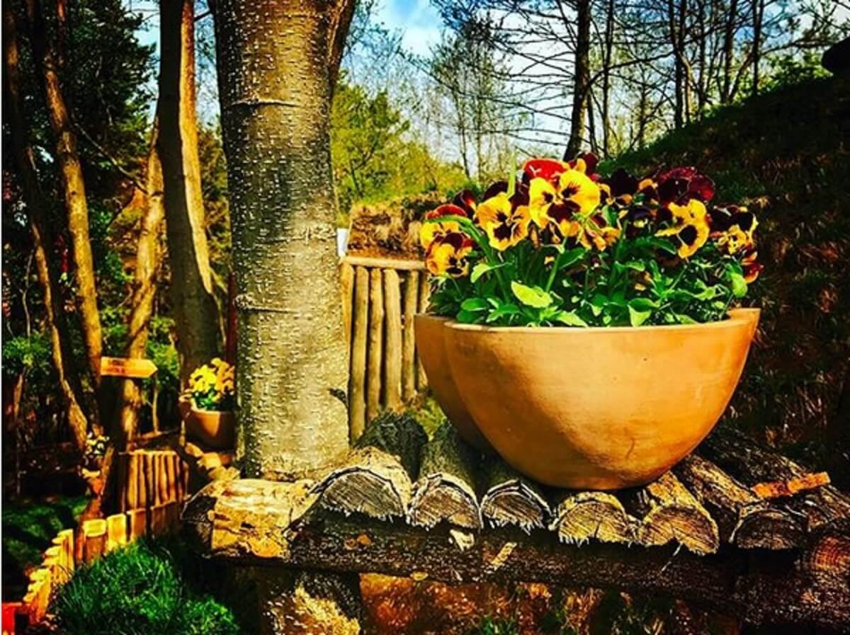 Cea mai frumoasa statiune din Romania BIXAD Trandafiri enormi