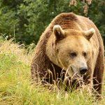 Povestile din sancuarul de ursi Libearty