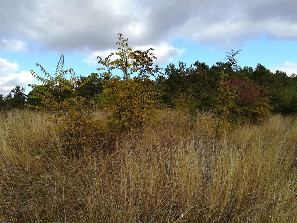 Pământul vechi al Dobrogei – Pădurea Hagieni 6