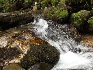 Padurea din Valea JIULUI
