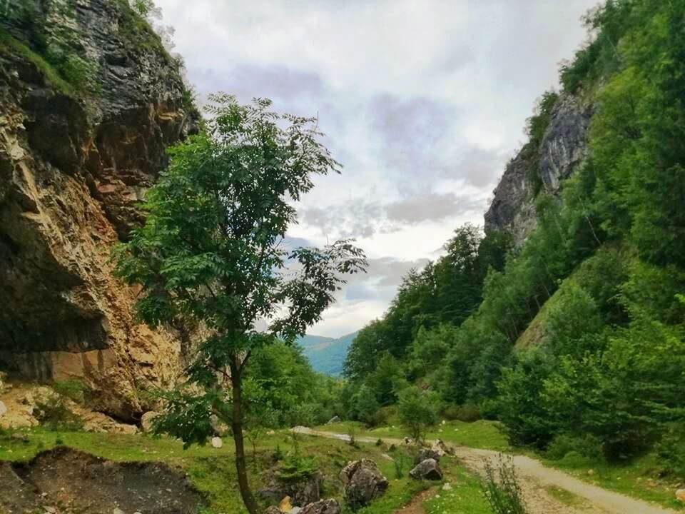 Tulișa – Valea de brazi 5