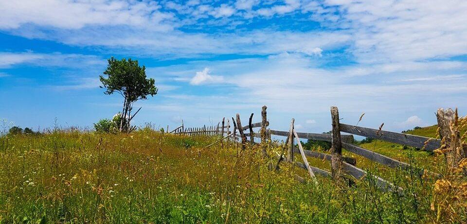 Zone folclorice din Hunedoara – Cerbăl 2