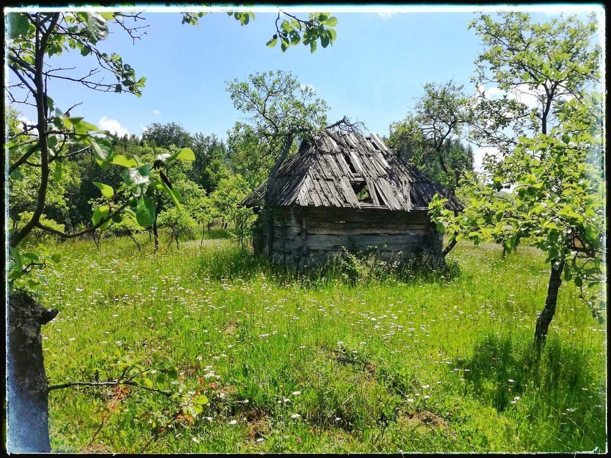 26. Colibă ancestrală în Cheile Buții