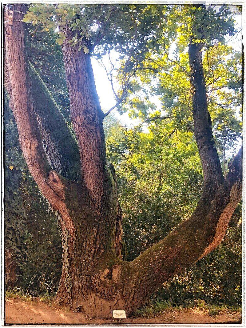1 Arboretumul Simeria