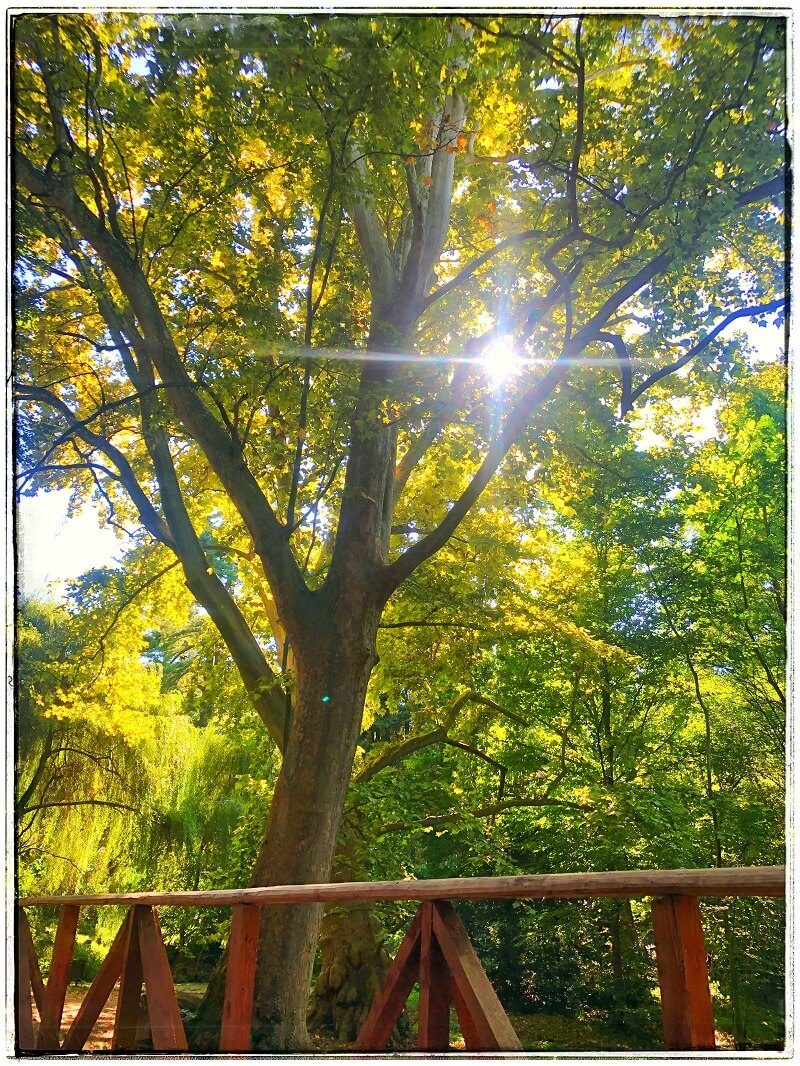 4 Arboretumul Simeria