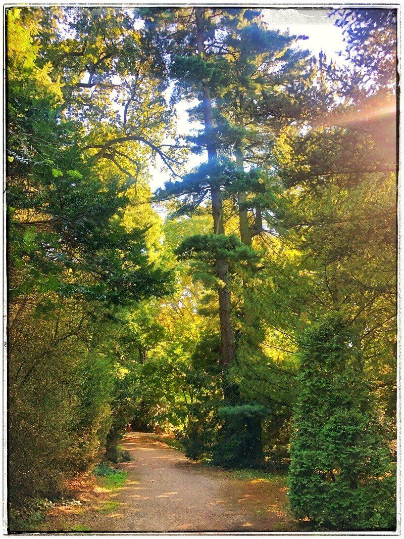 5 Arboretumul Simeria