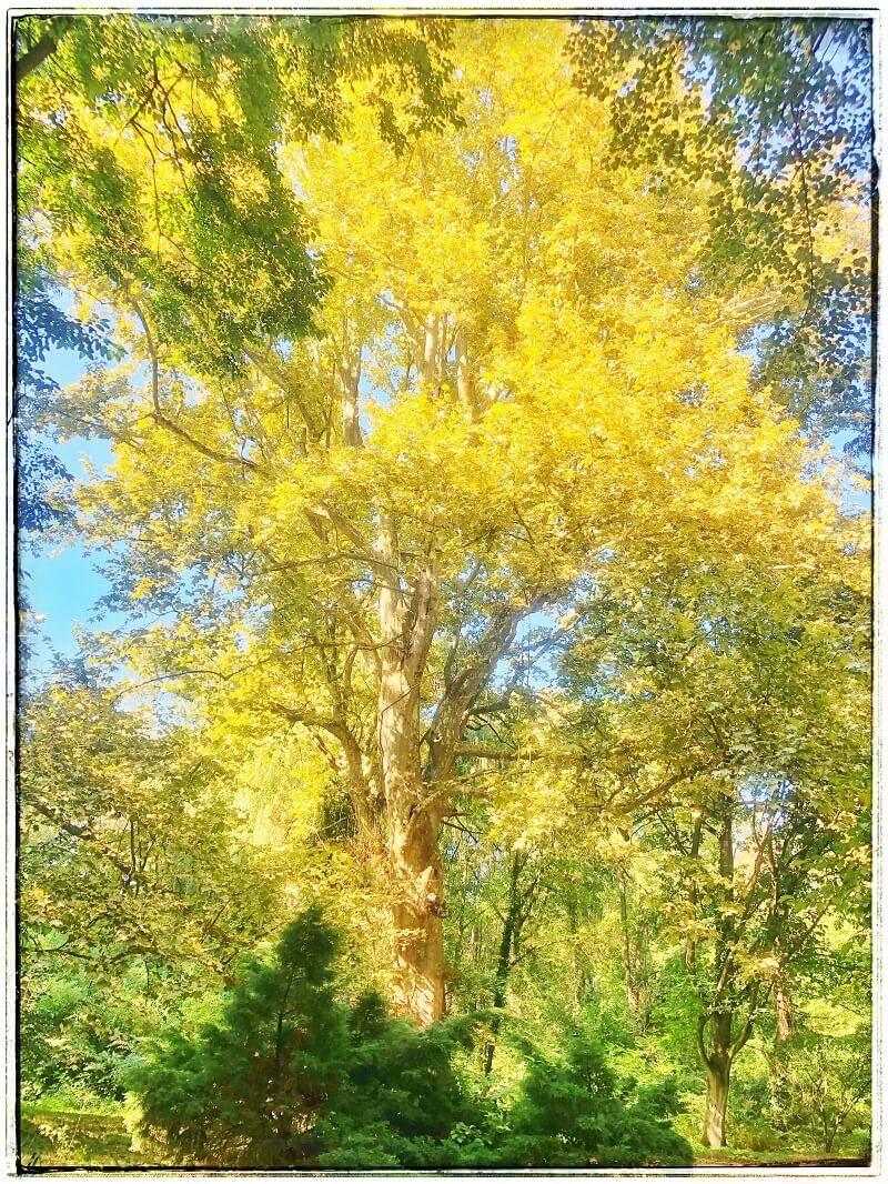 7 Arboretumul Simeria