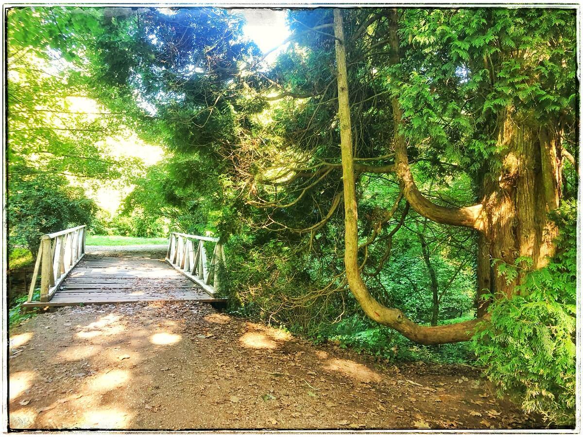 Arboretumul Simeria featured