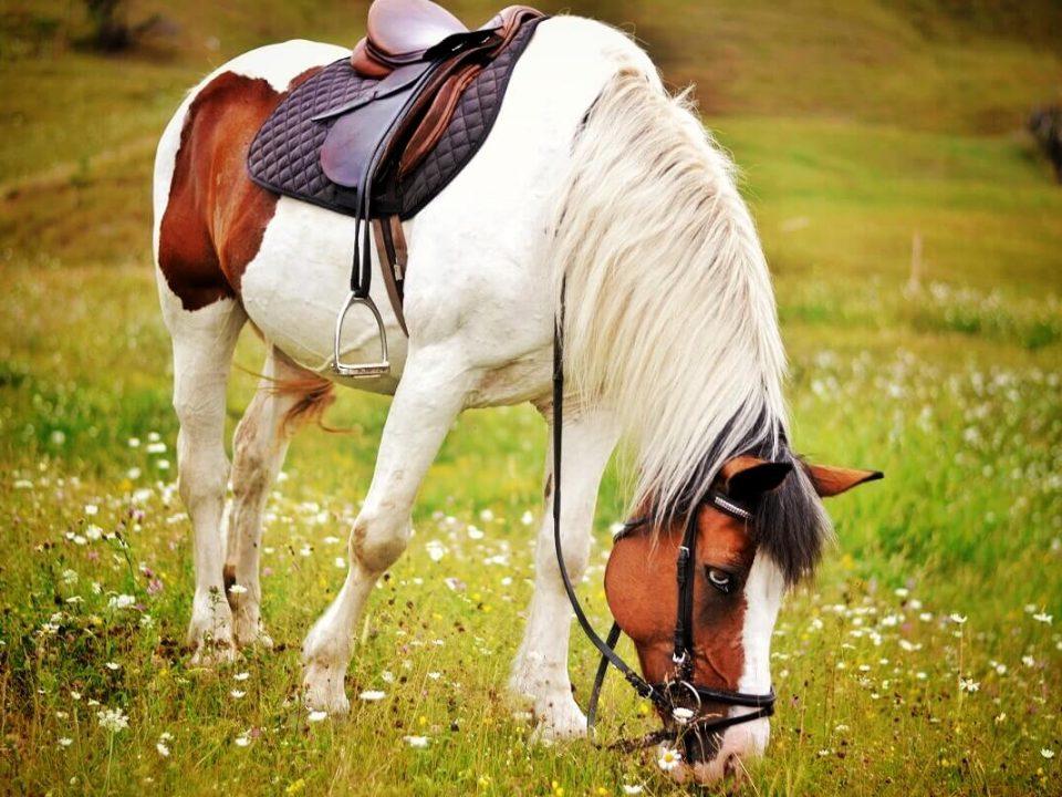 Ținutul Momârlanilor Drumeție Călare @ Carpathian Horse Trekking 5