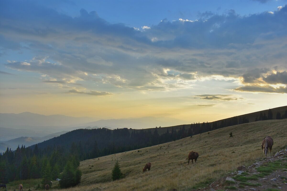 Tinutul Momarlanilor Drumetie Calare @ Carpathian Horse Treking 6