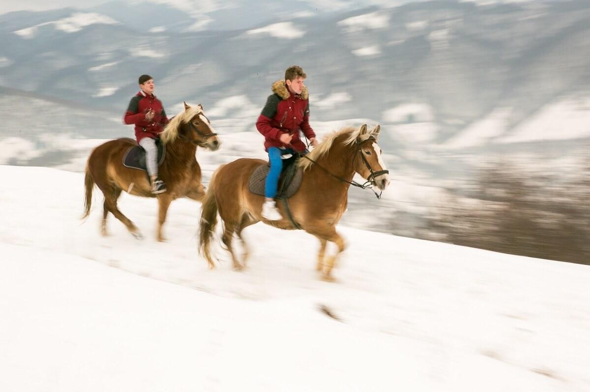 Legătura emoțională dintre om și animal. Om vs cal Povestea Locurilor Carpathian Horse Trekking featured