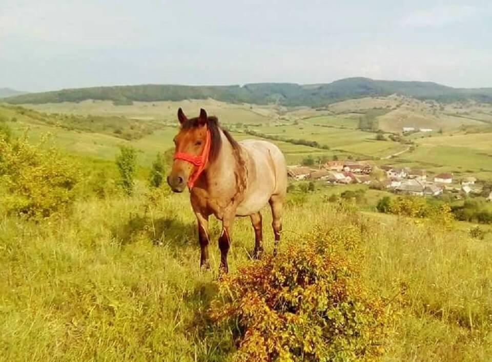 Viața la sat Comună Albești, Bistrița Năsăud featured