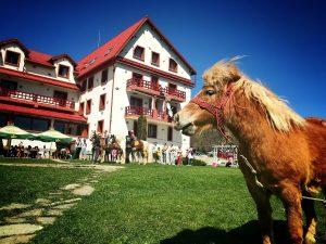 Aerul de munte Echitatie POVESTEA LOCURILOR Carpathian Horse Trekking featured