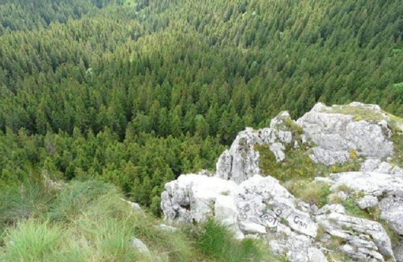 Codrii Moldovei. Codrul secular SLĂTIOARA 2