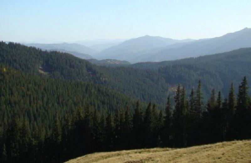 Codrii Moldovei. Codrul secular SLĂTIOARA 3