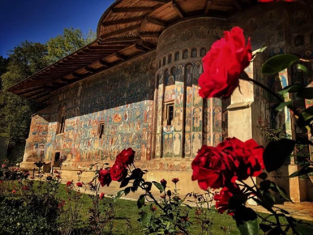 Trandafir Moldovenesc VORONET