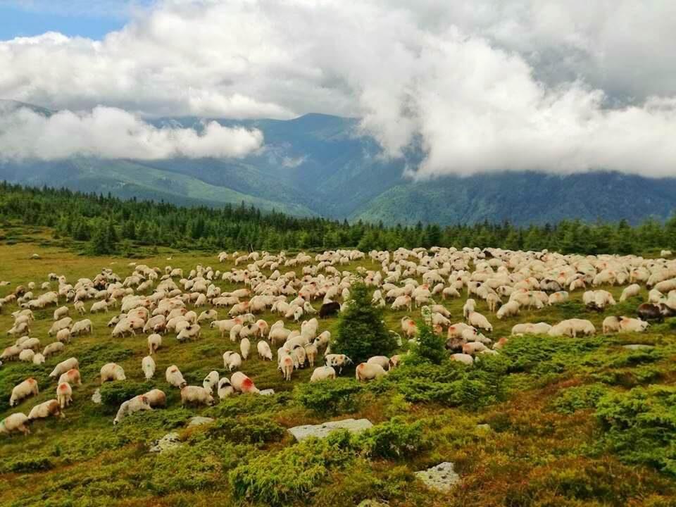 Tulișa – Valea de brazi 2