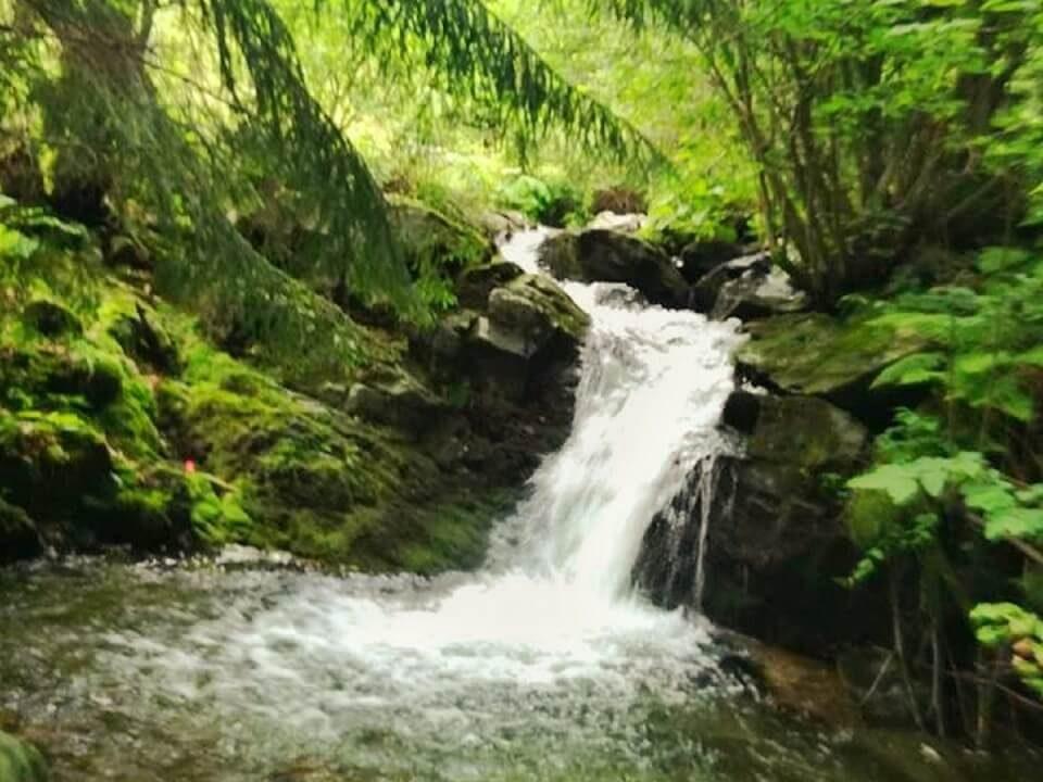 Tulișa – Valea de brazi 6