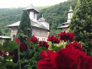 Foto trandafiri Manastirea LAINICI