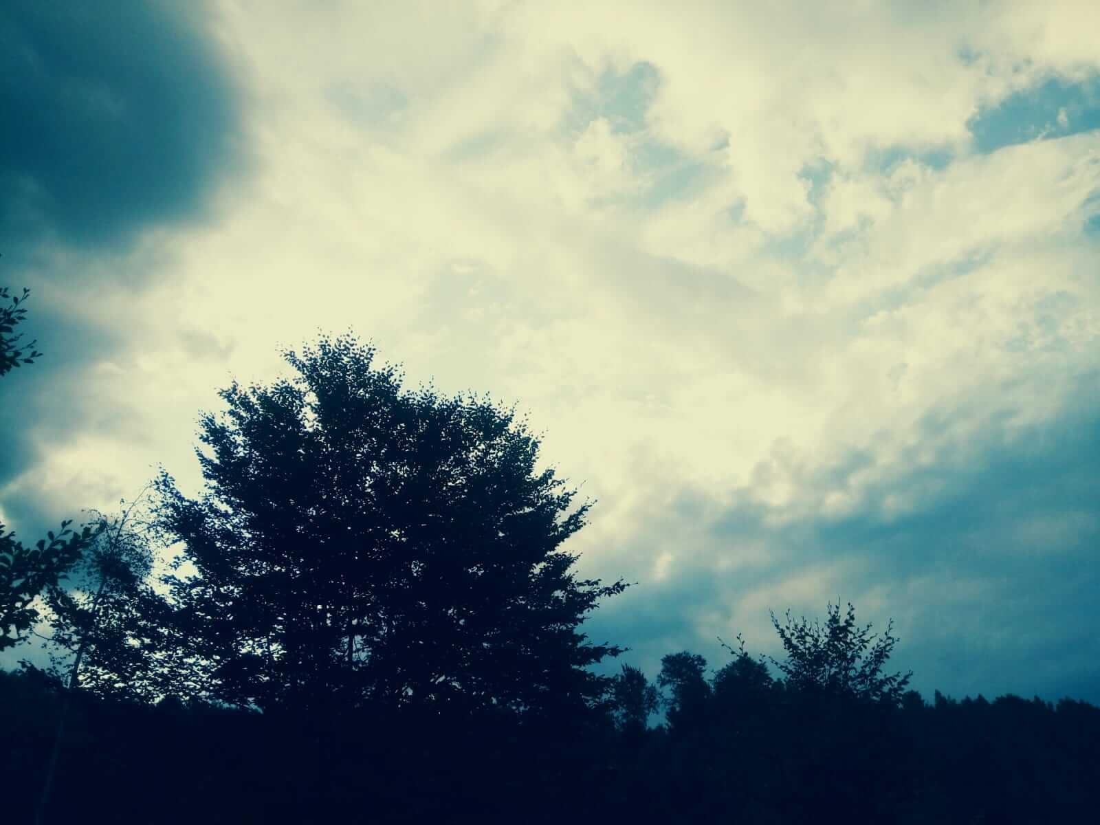 Copacul lui ZAMOLXE 6