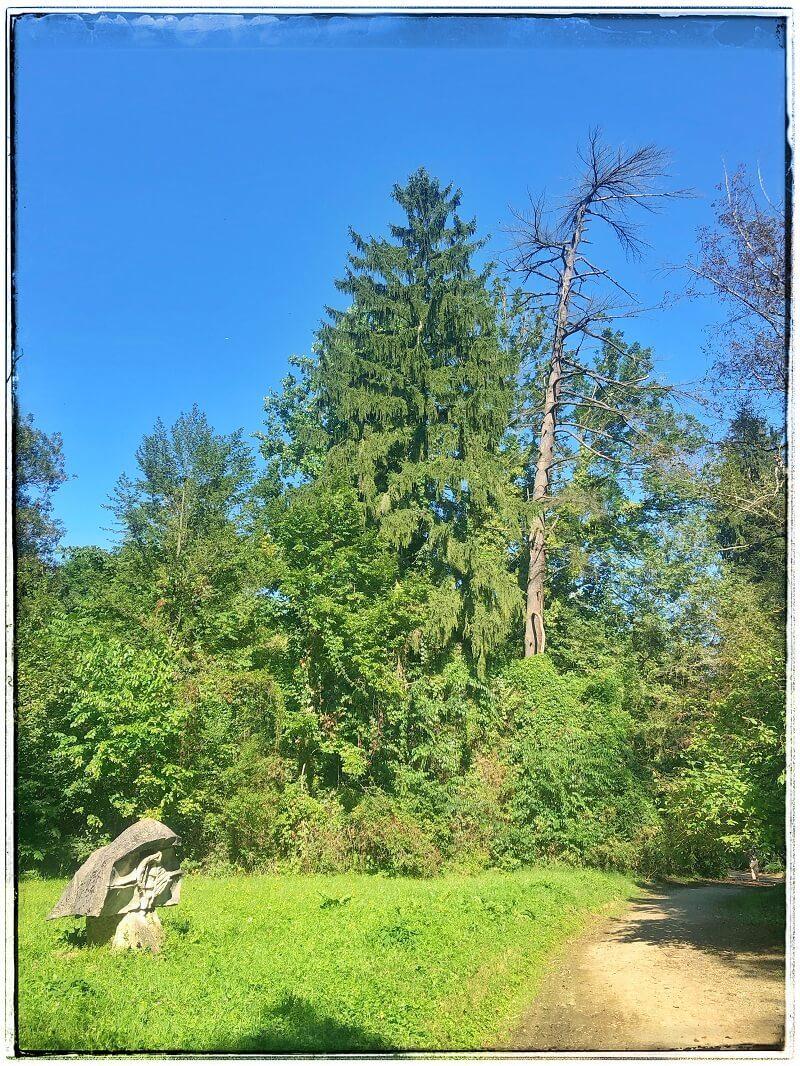 6 Arboretumul Simeria