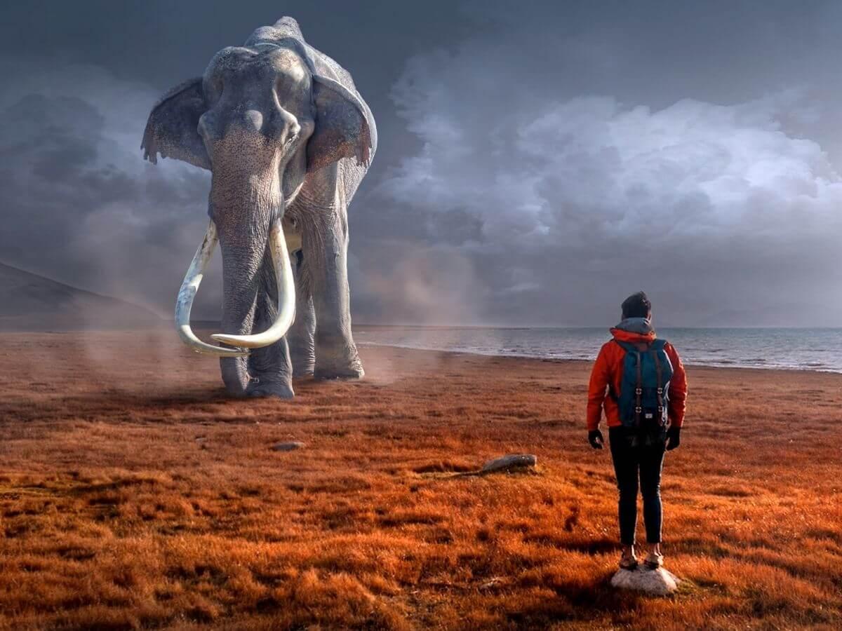 Fildeș de 🐃 mamut 🐃 bucureștean
